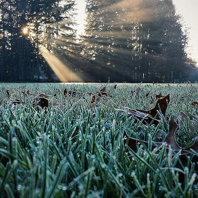 Pilkington Park in the frosty morning.